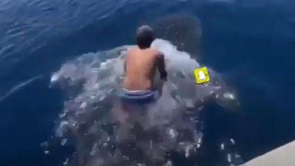 Un hombre sobre un tiburón - Sputnik Mundo