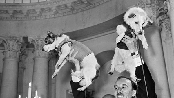 El académico Oleg Gazenko, pionero de la medicina espacial, y las perras cosmonautas Belka y Strelka durante una conferencia de prensa. - Sputnik Mundo