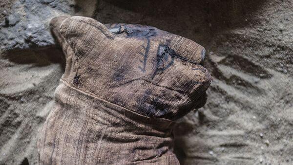 Una momia de un gato (imagen referencial) - Sputnik Mundo
