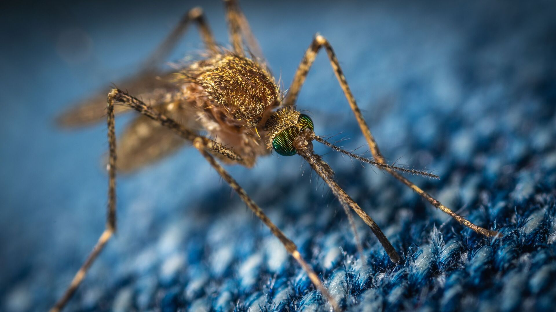 Un mosquito, referencial - Sputnik Mundo, 1920, 18.07.2021