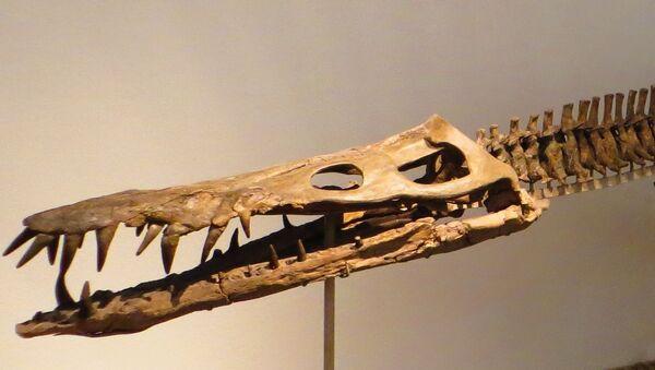 Liopleurodon, reptil marino de la familia de los pliosaurios - Sputnik Mundo