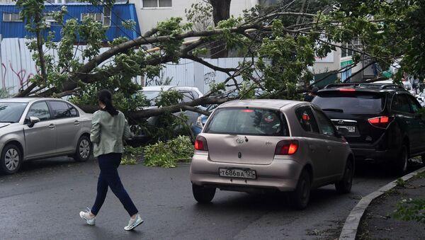 Consecuencias del tifón Maysak en Vladivostok, Rusia - Sputnik Mundo