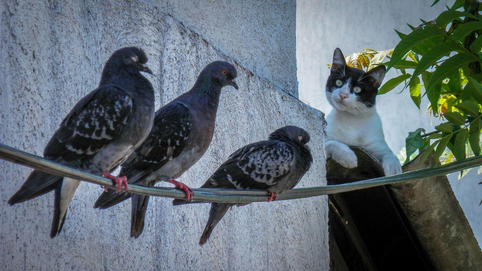 Un gato junto a palomas - Sputnik Mundo, 1920, 27.05.2021