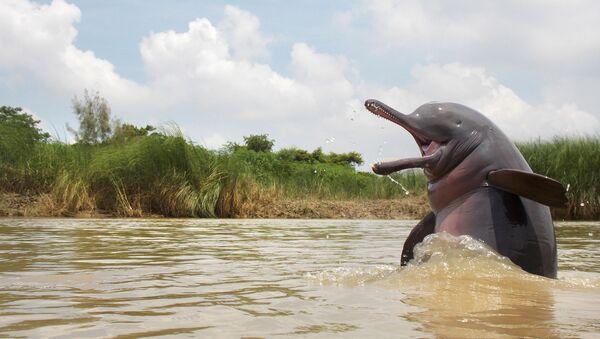 La flora y la fauna asiáticas a través del concurso The Nature inFocus Photography Awards   - Sputnik Mundo