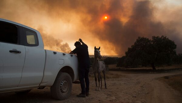 Incendios forestales en Huelva, España  - Sputnik Mundo