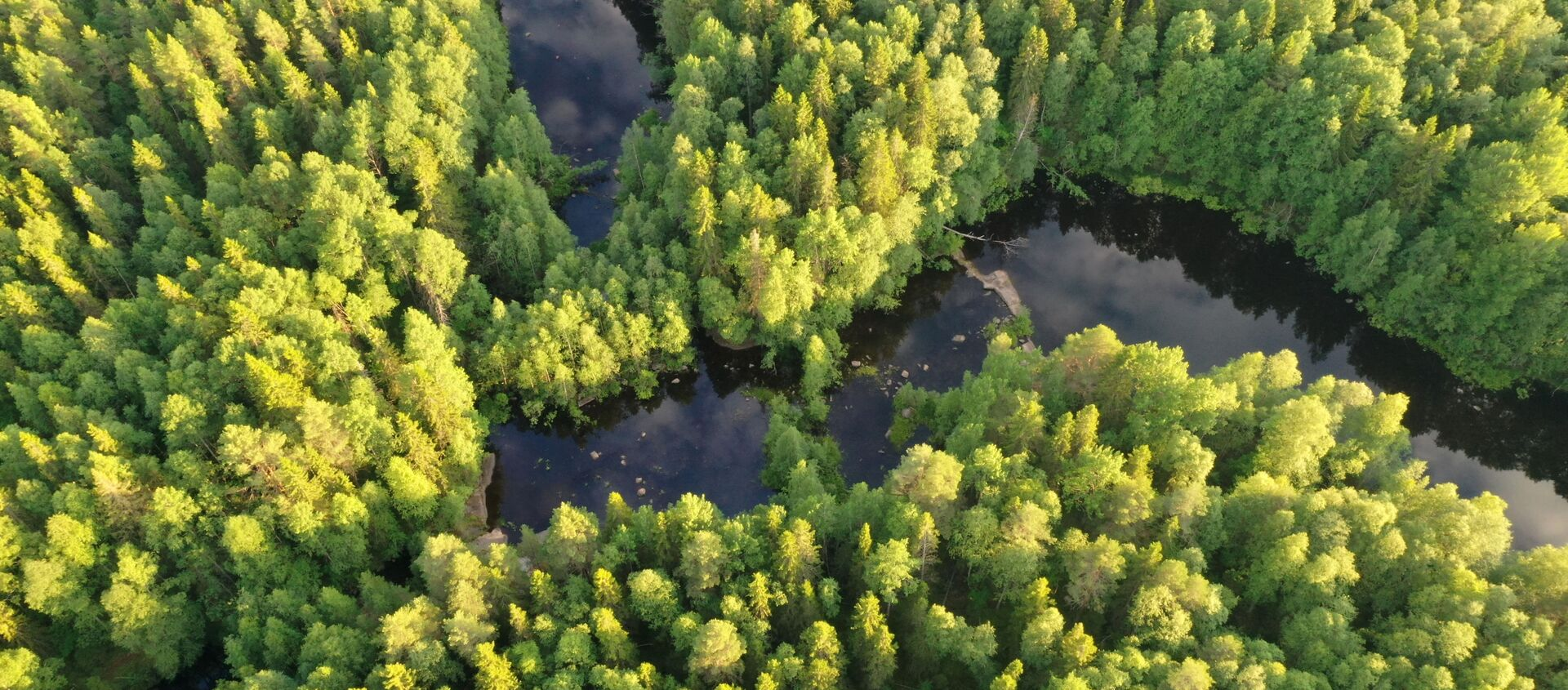 Un bosque en Rusia - Sputnik Mundo, 1920, 09.11.2020