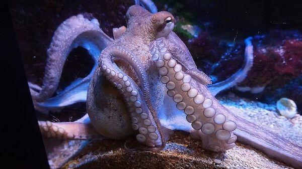 Calamares - Sputnik Mundo