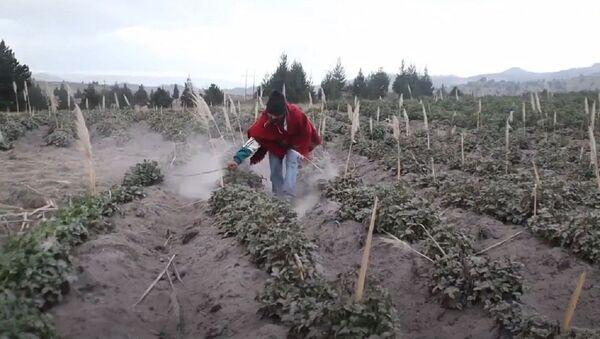 Lluvia de cenizas: el volcán Sangay afecta varias localidades y cultivos en Ecuador - Sputnik Mundo