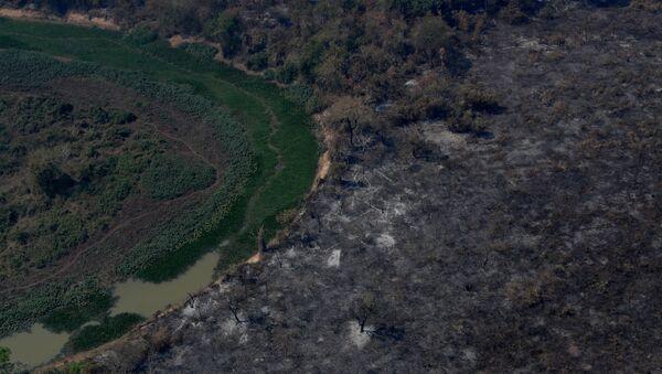 Las consecuencias de los incendios en el Pantanal de Brasil - Sputnik Mundo
