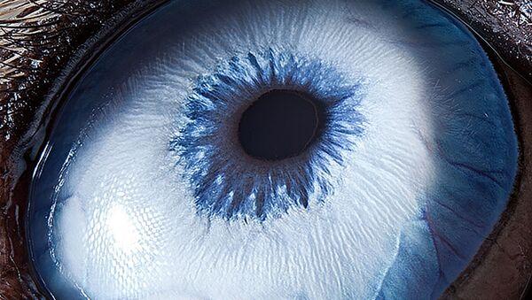 Los ojos de los animales, vistos por una cámara macro    - Sputnik Mundo