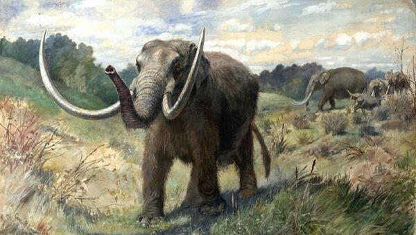 Un mastodonte, imágen referencial - Sputnik Mundo