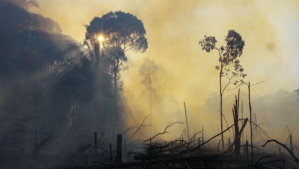Un área consumida por los incendios en el estado de Amazonas, Brasil. 7 de agosto de 2020 - Sputnik Mundo