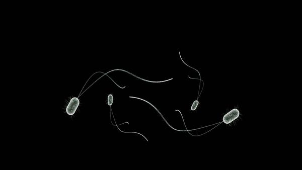 Unas bacterias (imagen referencial) - Sputnik Mundo