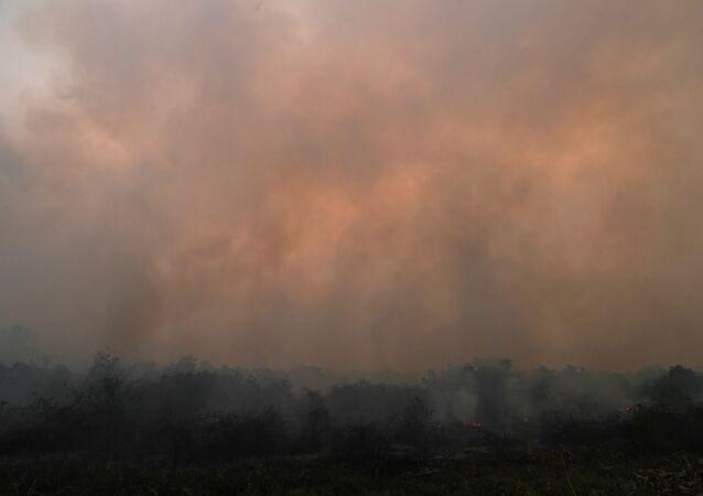Incendios en El Pantanal brasileño