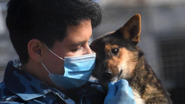 Un perro de la raza shalaika - Sputnik Mundo