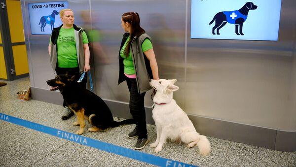 Perros entrenados para detectar el coronavirus en el aeropuerto de Helsinki, Finlandia - Sputnik Mundo