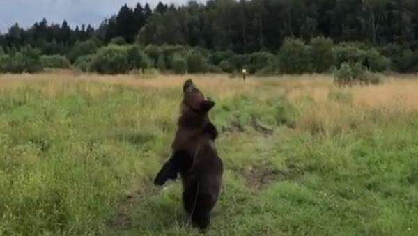 El oso Tom - Sputnik Mundo