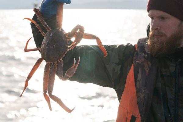 Рыбак демонстрирует свежевыловленного живого краба - Sputnik Mundo