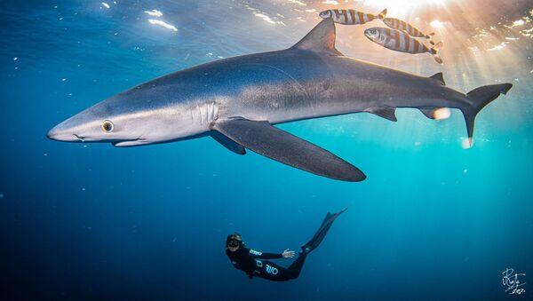Tiburones en el Cantábrico - Sputnik Mundo
