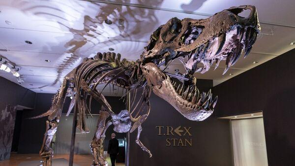 El esqueleto del dinosaurio T-Rex apodado Stan - Sputnik Mundo