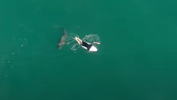 El aterrador encuentro de un surfista australiano con un tiburón - Sputnik Mundo