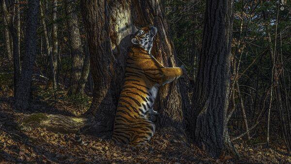 Снимок The embrace российского фотографа Sergey Gorshkov, ставший победителей конкурса Wildlife Photographer of the Year 56  - Sputnik Mundo