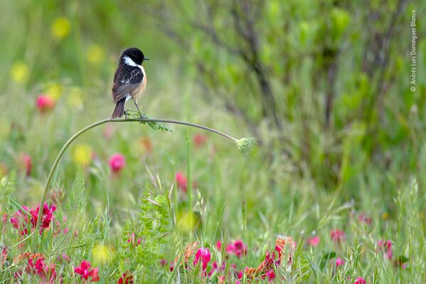 Un ruso se gana el premio al Fotógrafo de Vida Silvestre del Año 2020 - Sputnik Mundo