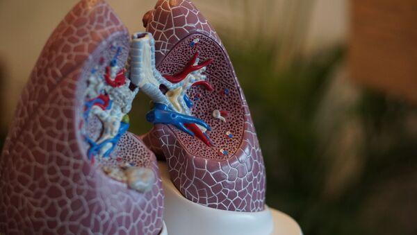 El modelo de los pulmones - Sputnik Mundo