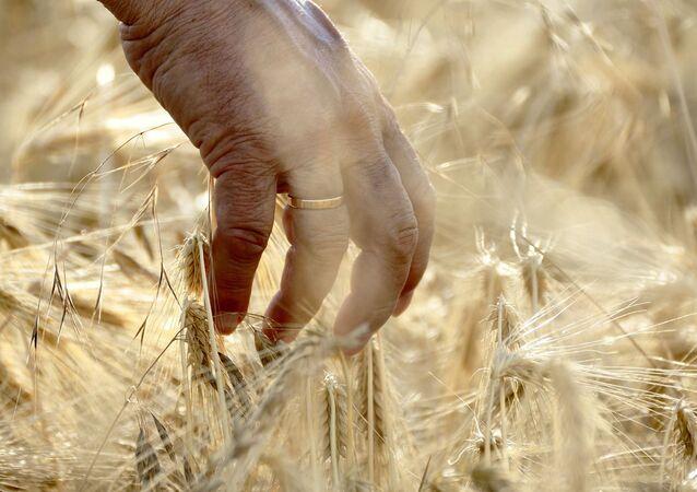 Mano entre los cultivos