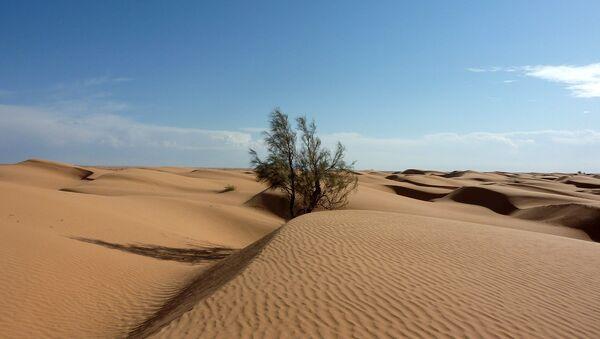 Un árbol en el desirto del Sáhara - Sputnik Mundo