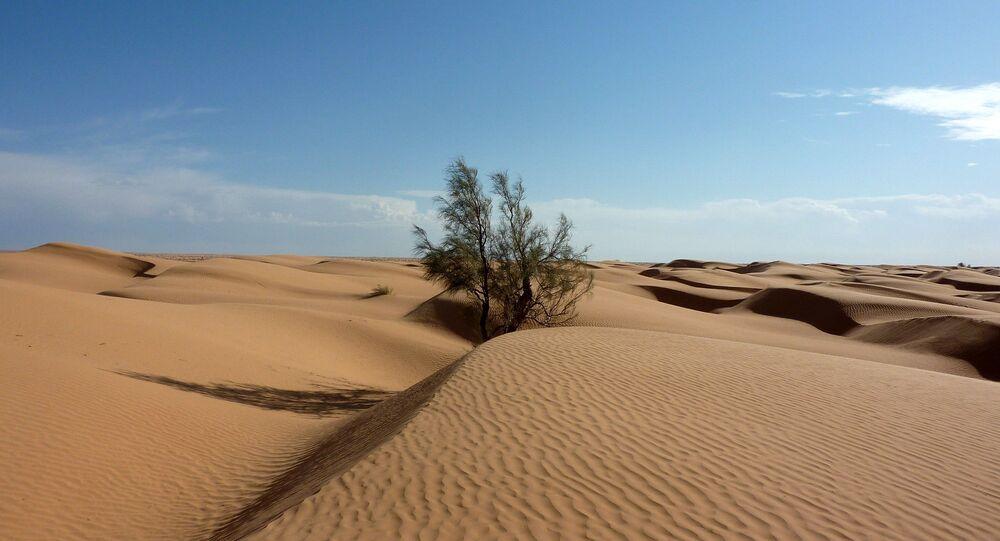 Un árbol en el desirto del Sáhara
