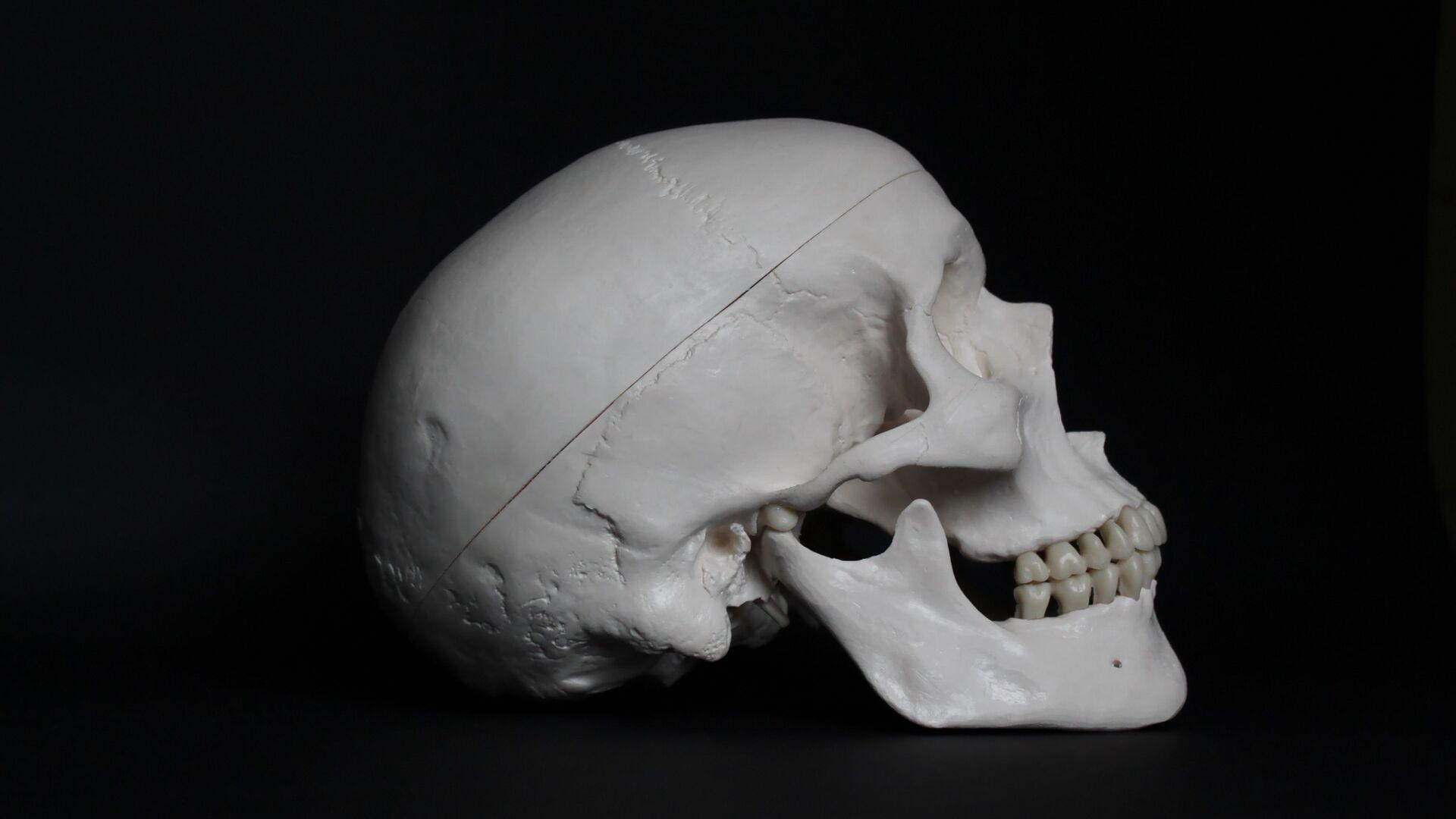 Un cráneo humano (archivo) - Sputnik Mundo, 1920, 27.05.2021