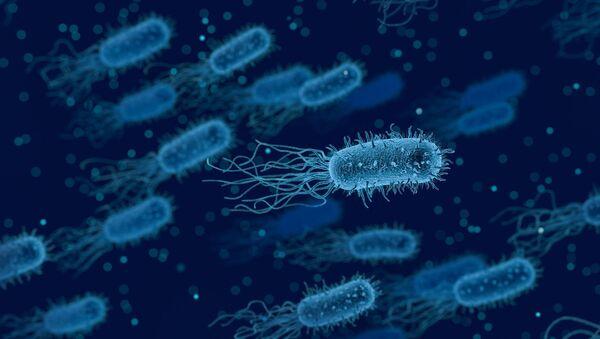 Una bacteria (imagen referencial) - Sputnik Mundo