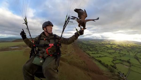 Nigel Hawkins practica parahawking - Sputnik Mundo