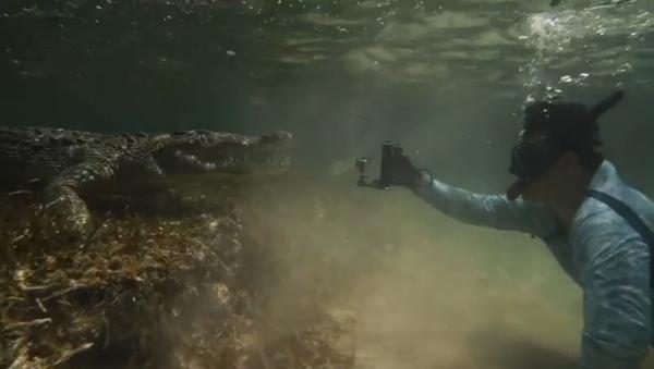 Un fotógrafo nada con los inteligentes cocodrilos de México - Sputnik Mundo