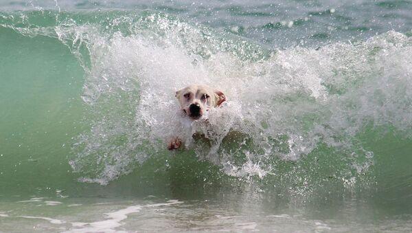 Un perro en el agua - Sputnik Mundo