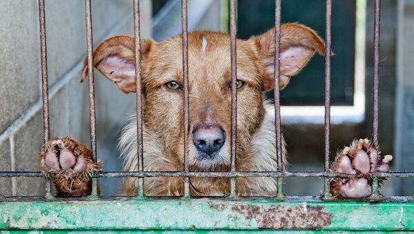 Perro abandonado (imagen referencial) - Sputnik Mundo