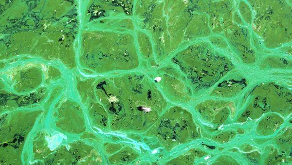 Cianobacterias - Sputnik Mundo