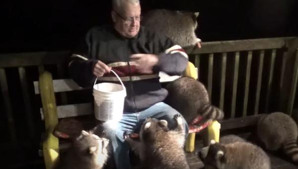El 'encantador de mapaches' es rodeado por sus mascotas - Sputnik Mundo