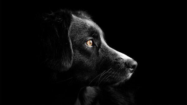 Un perro, referencial - Sputnik Mundo