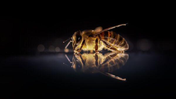Una abeja, referencial - Sputnik Mundo