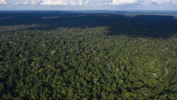 La selva amazónica (archivo) - Sputnik Mundo