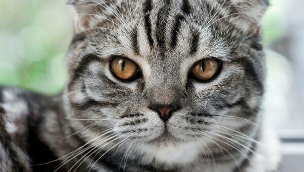Un gato (archivo) - Sputnik Mundo