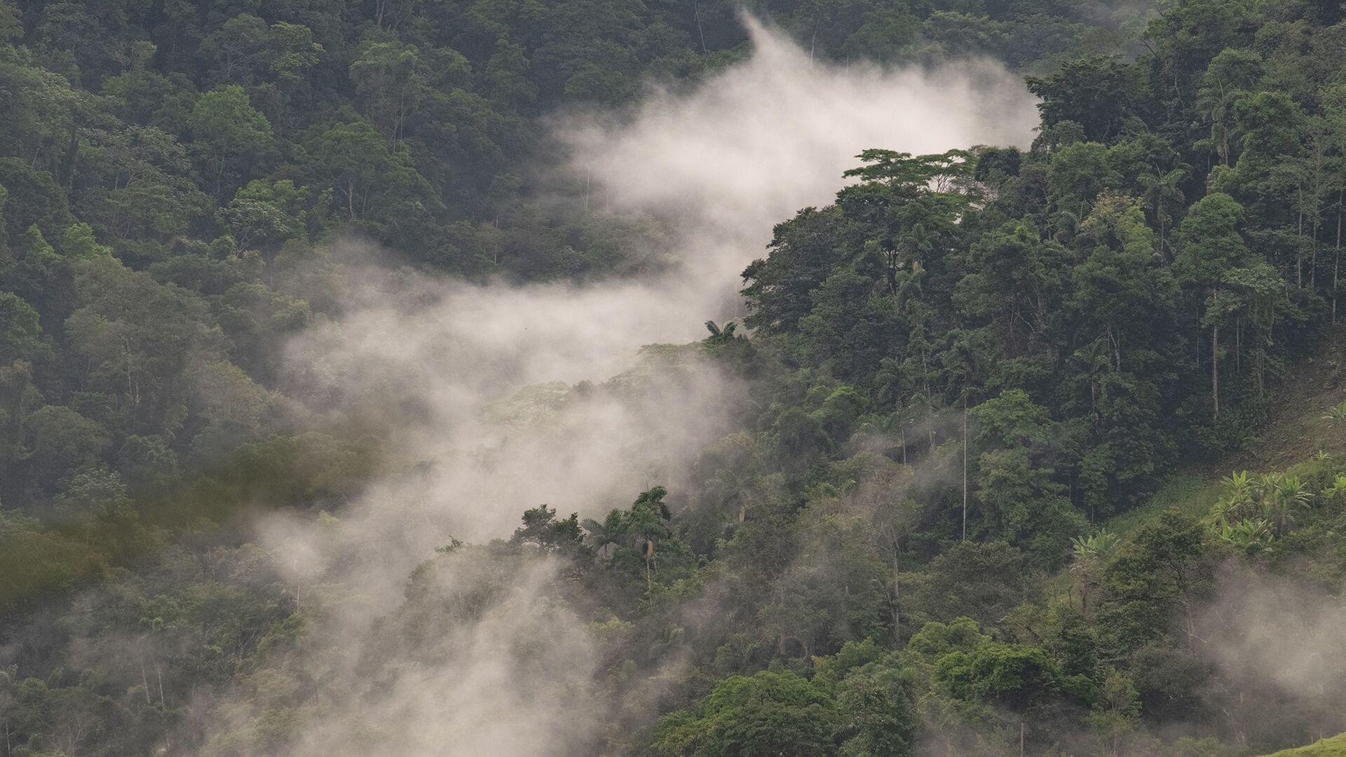 Neblina en los bosques del tapón del Darién - Sputnik Mundo, 1920, 15.04.2021