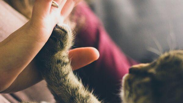 La mano de una persona y la pata de un gato - Sputnik Mundo