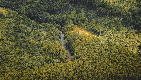 Un bosque en el sureste de Brazil (archivo) - Sputnik Mundo