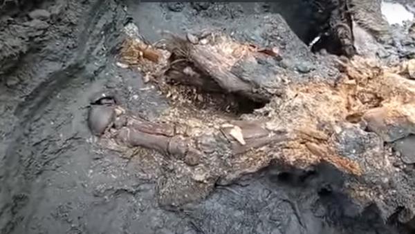 Cuerpo momificado de un rinoceronte lanudo - Sputnik Mundo