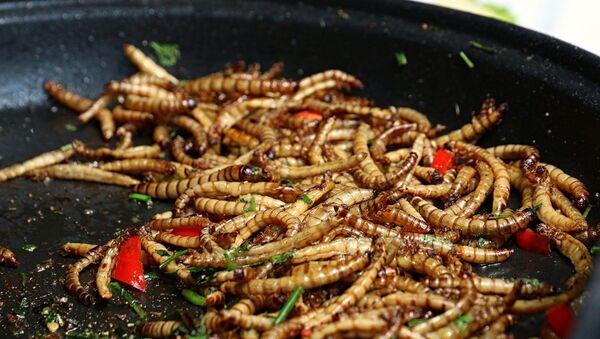 Imagen referencial de gusanos como alimento - Sputnik Mundo