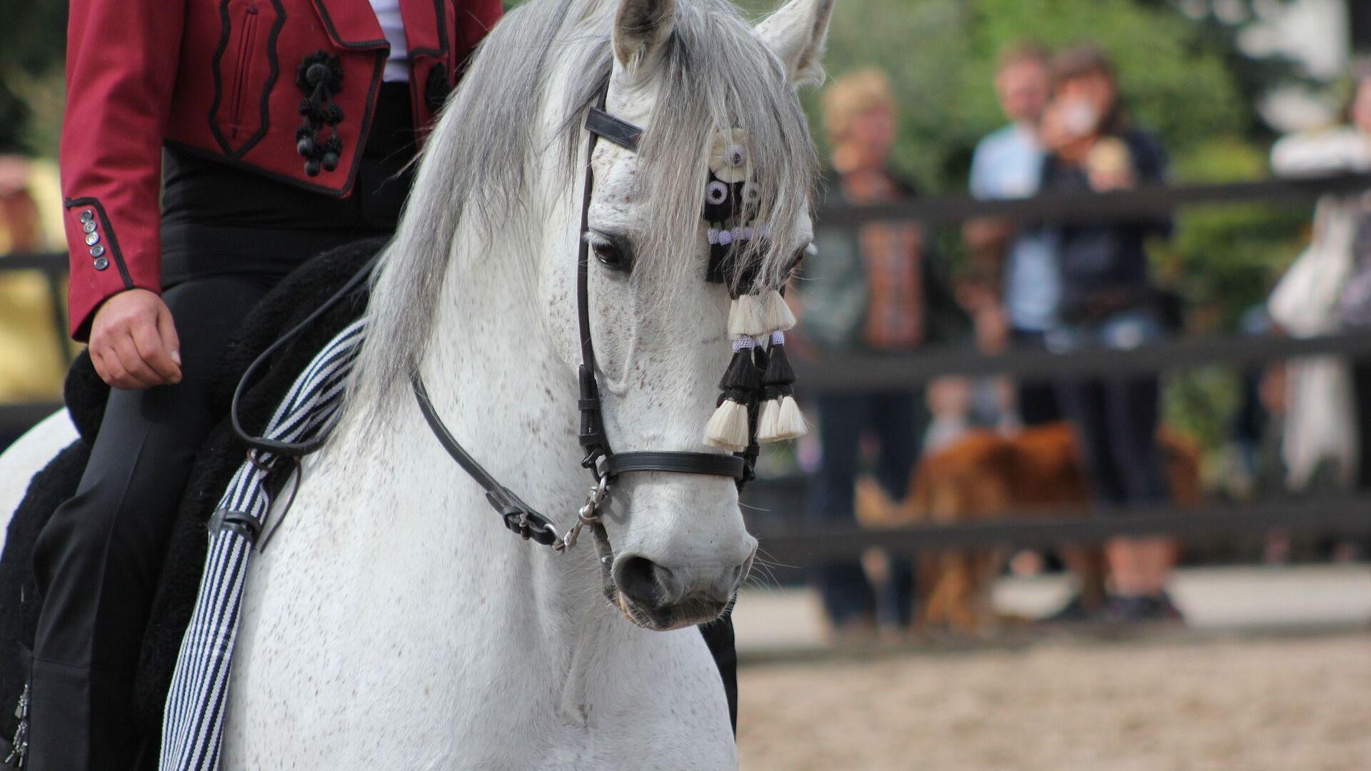 caballo andaluz PRE - Sputnik Mundo, 1920, 12.07.2021