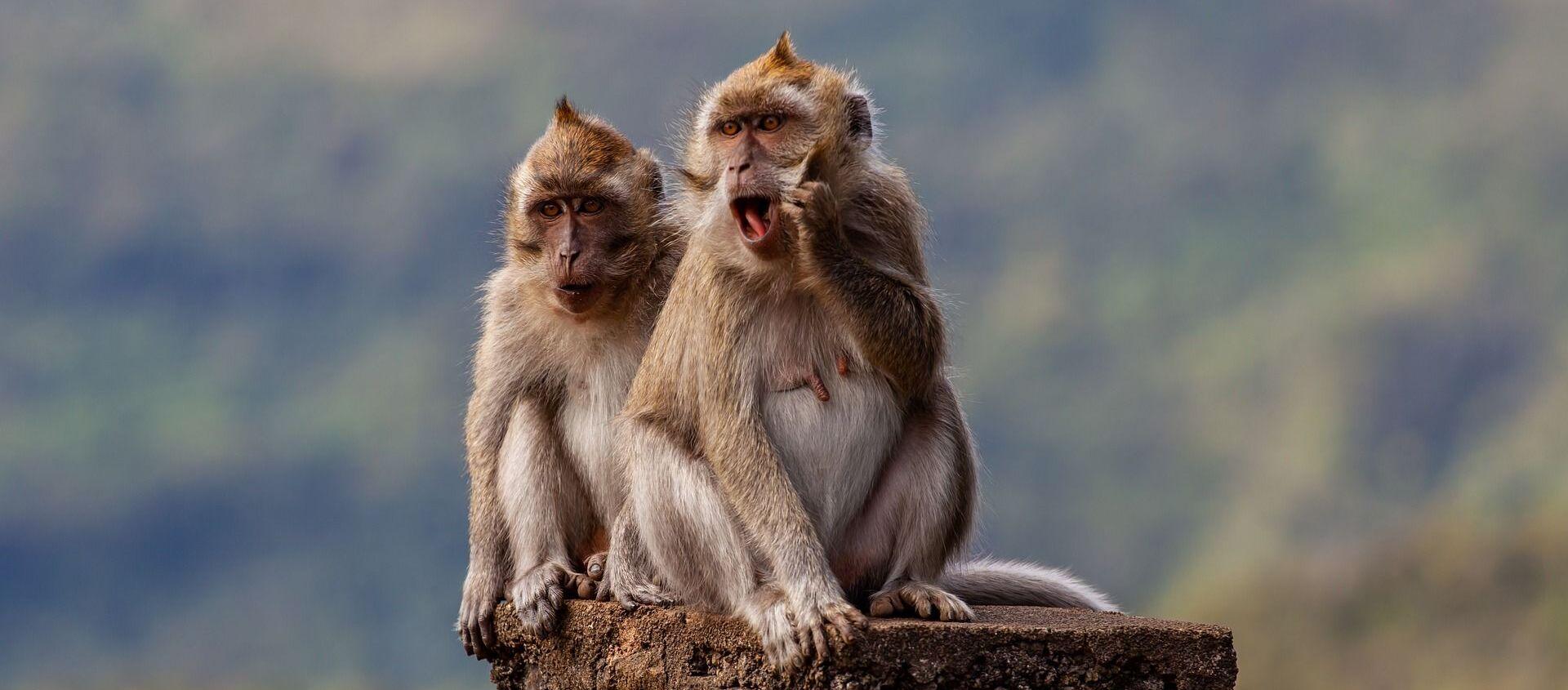 Dos macacos - Sputnik Mundo, 1920, 16.01.2021